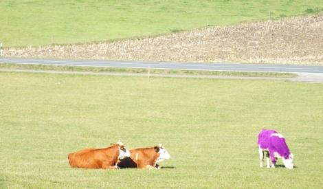 Homöopathie für Rindviecher